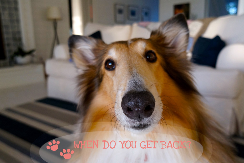how-long-can-i-leave-my-dog-alone