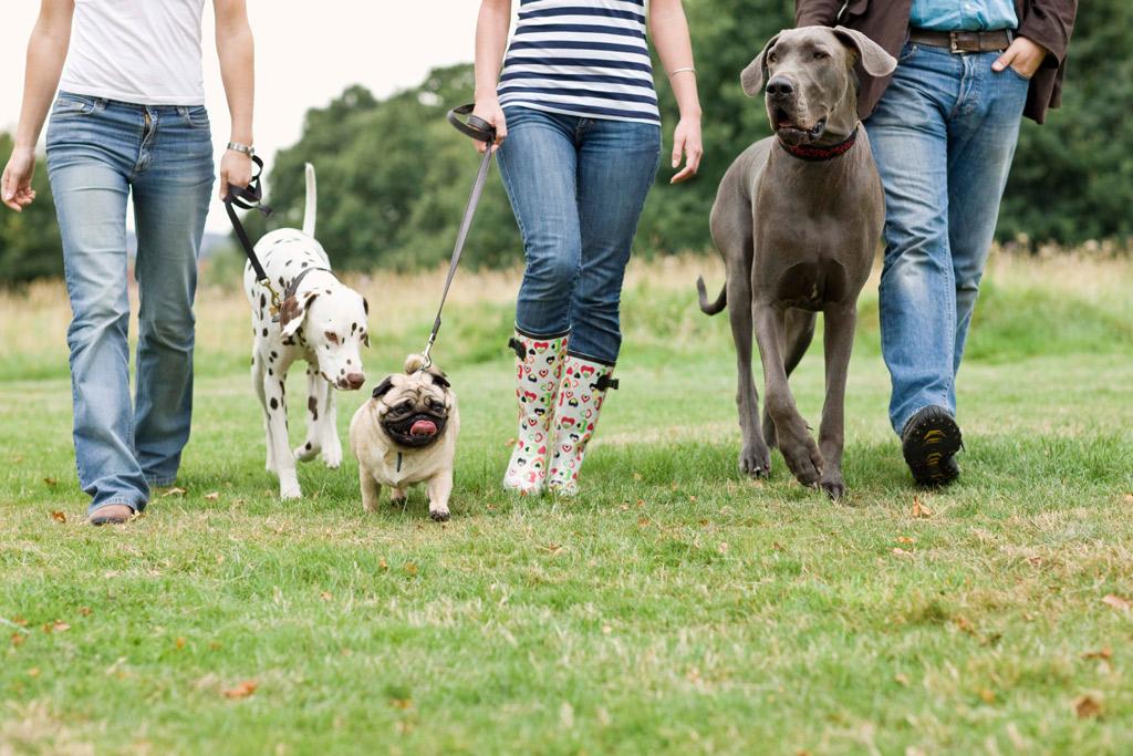how-often-should-i-walk-my-dog