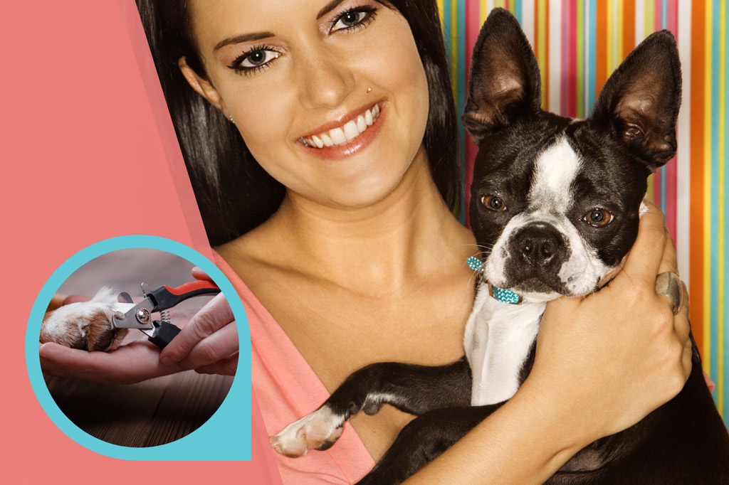 how-often-to-cut-boston-terrier-nails