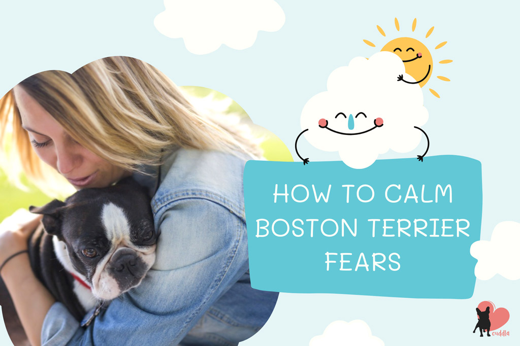 how-to-calm-your-boston-terriers-fears