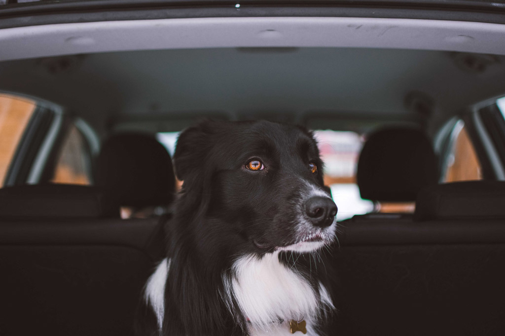 how-to-travel-by-car-with-your-dog