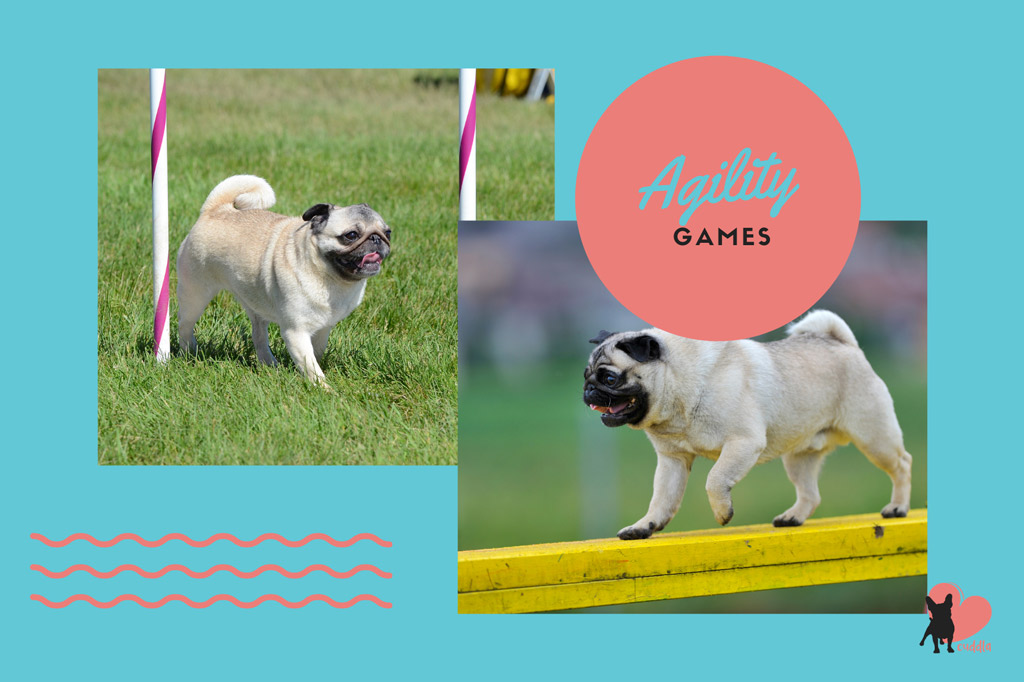 pug-activities-agility-games