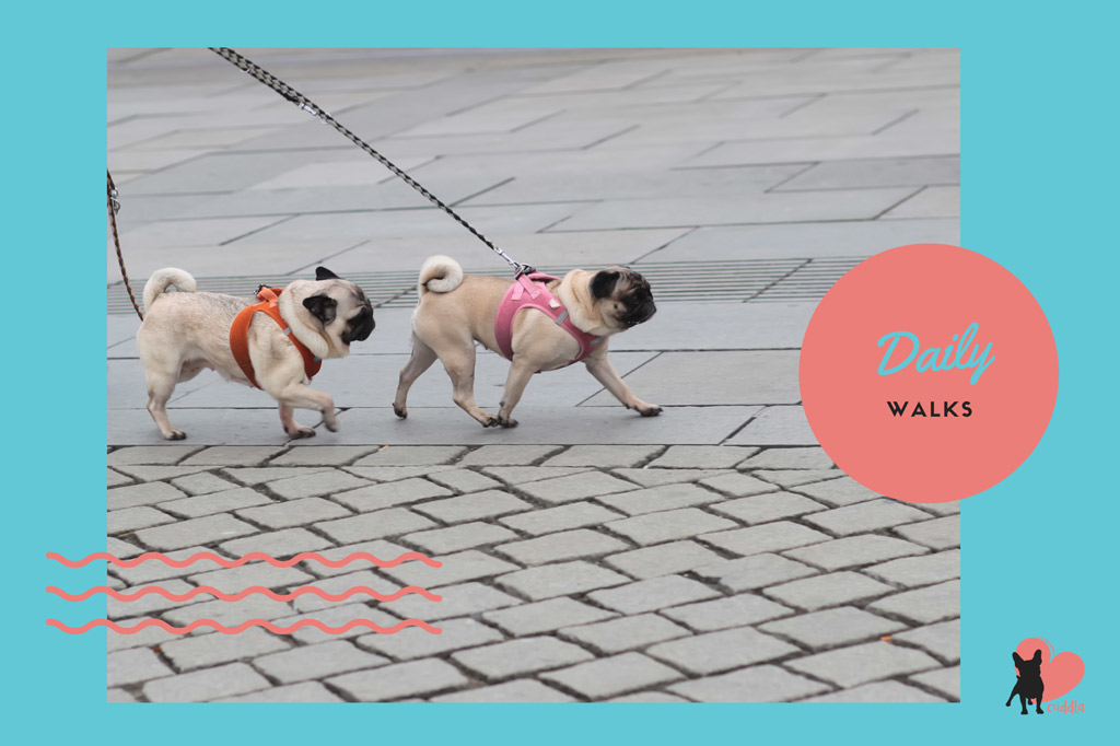 pug-activities-daily-walks