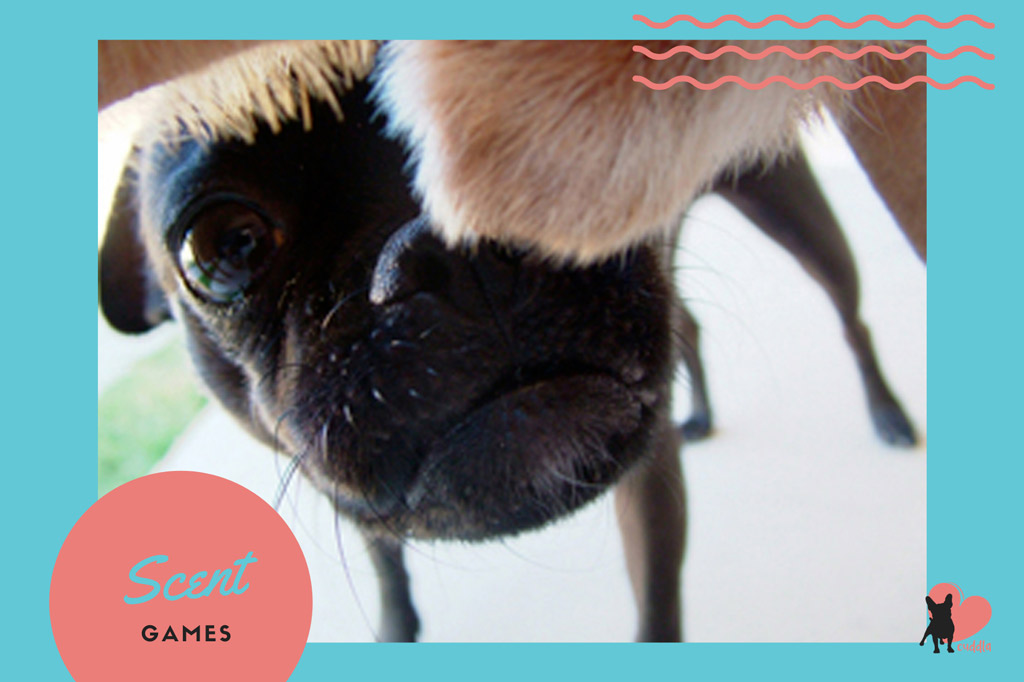 pug-activities-scent-games