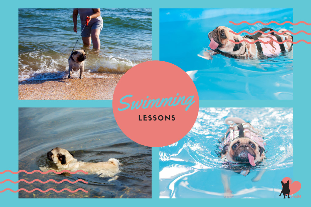 pug-activities-swimming