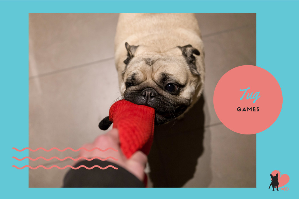pug-activities-tug-games