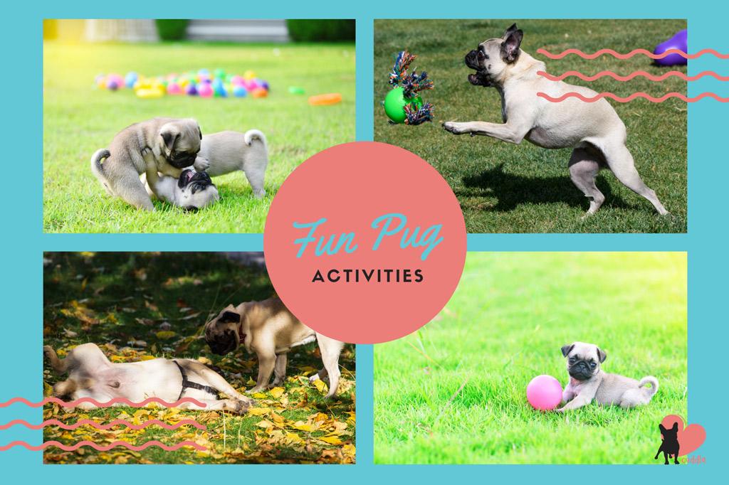 pug-activities