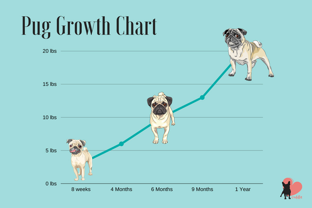 pug-growth-chart