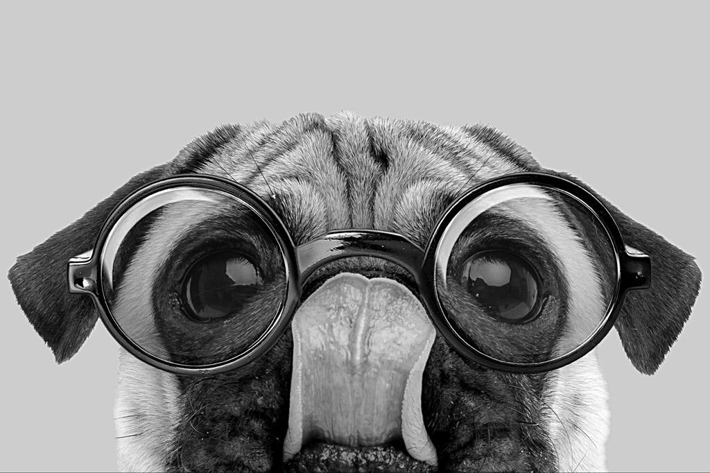 pug-intelligence