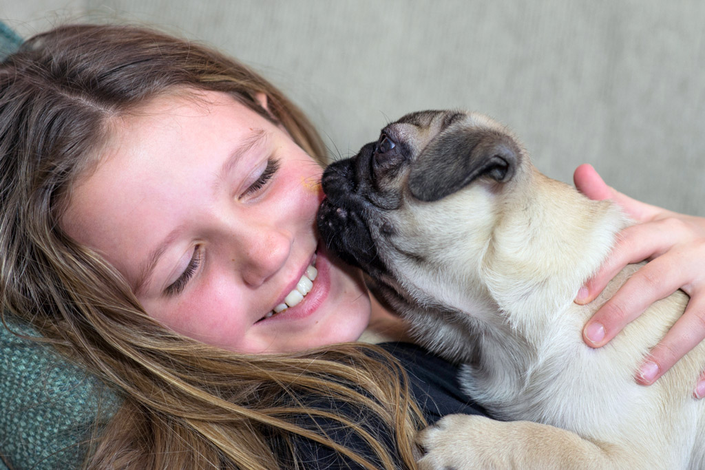 pug-licking-kissing