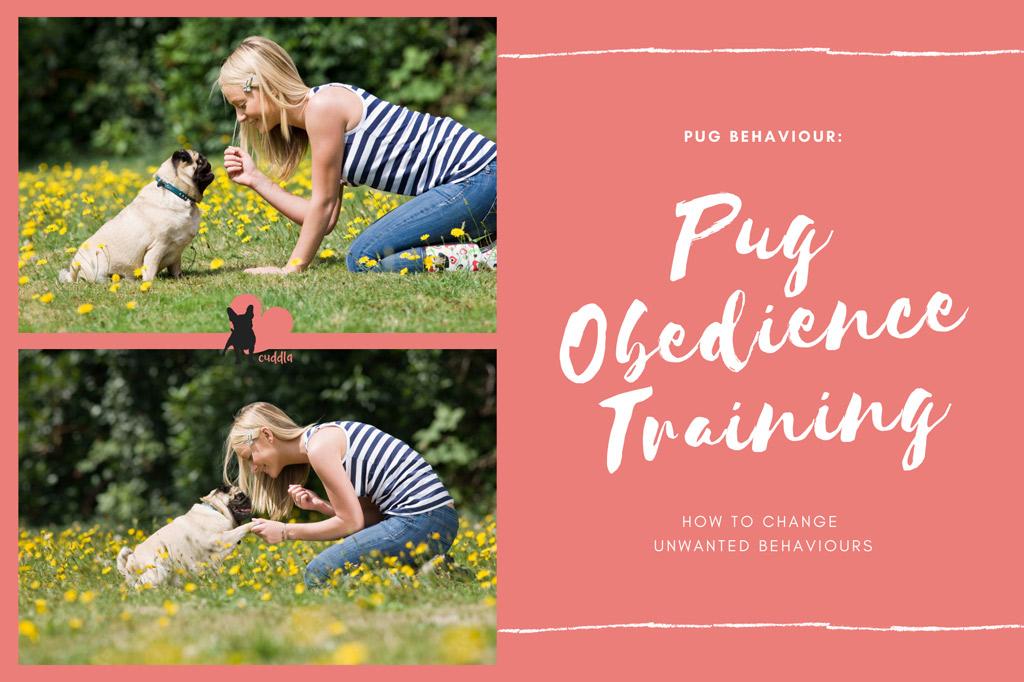 pug-obedience-training