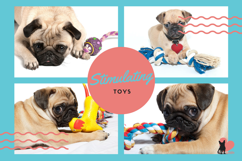 pug-toys-mental-stimulation