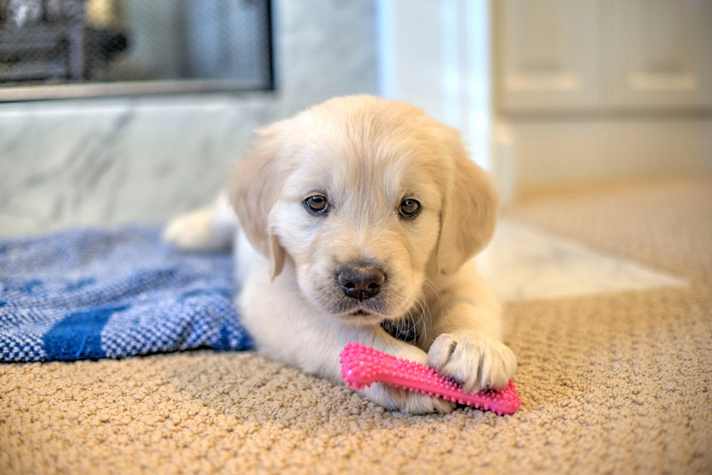 puppy-chew-toy-teething