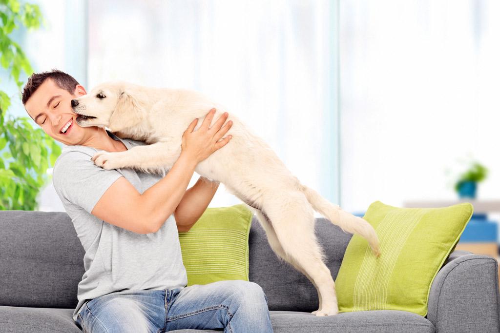 puppy-seeking-affection
