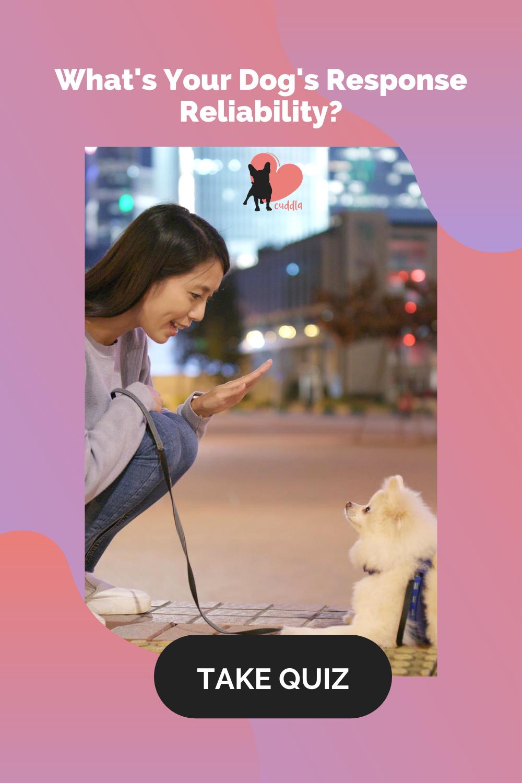 quiz-dog-response-reliability-v1