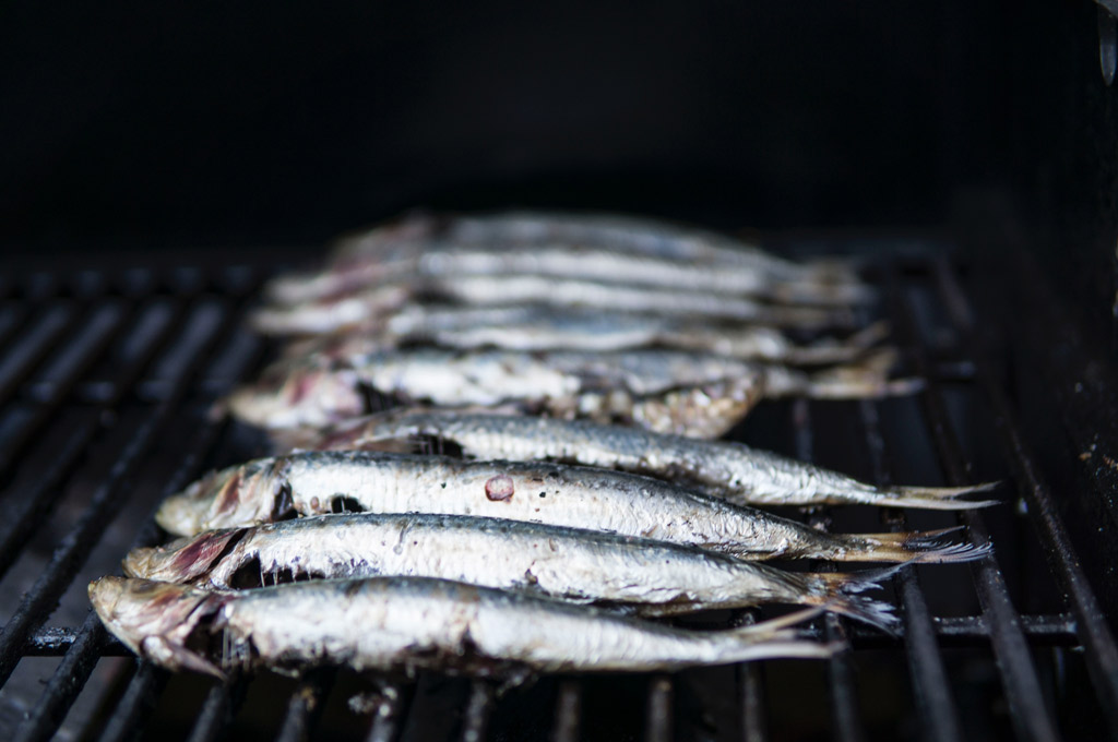 sardines-treat-for-dogs