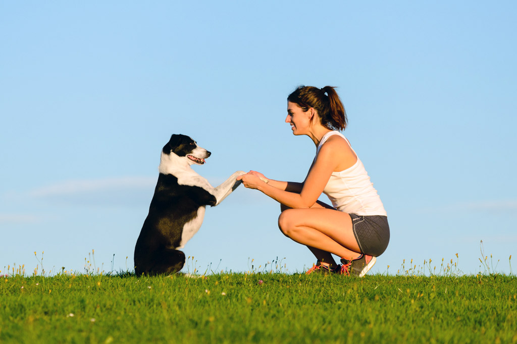 training-basics-for-adult-dogs