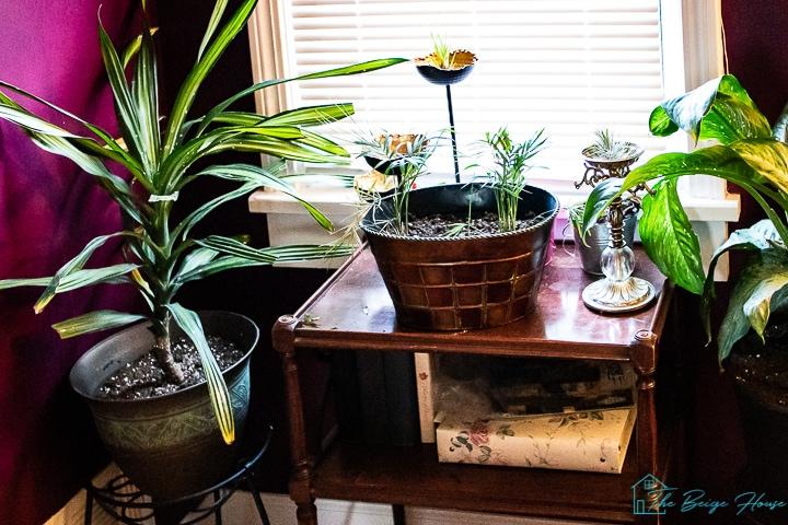 buying plants online