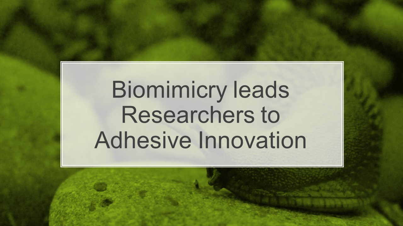 Biomimicry leads Researchers to Adhesive Innovation