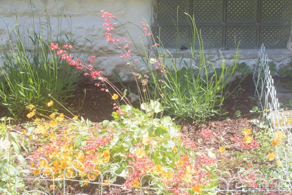 DIY Wildflower Garden