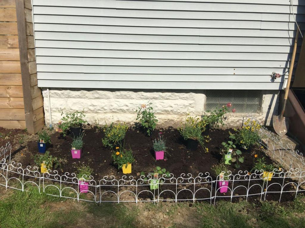 Creating a wildflower garden