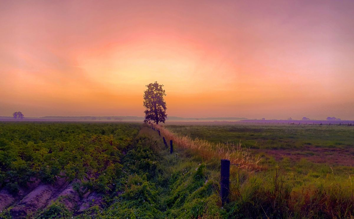 Orange red dramatic glow in a dawning sunrise sky over a Countryside single tree farming landscape