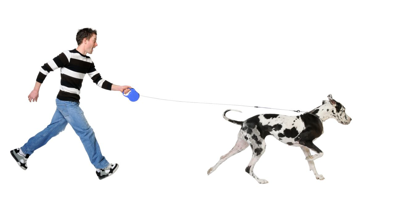 Dog Walking 101