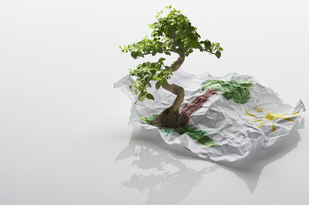 Tree Growing From Drawing - The Global Entrepreneur: Taking Your Business International - Innovation