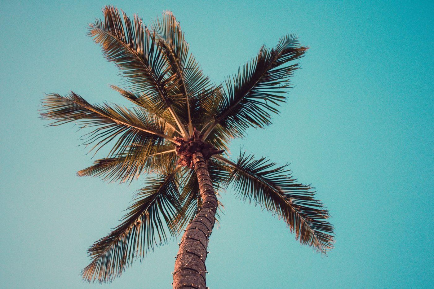 Comment prendre soin de votre palmier [Guide pratique]