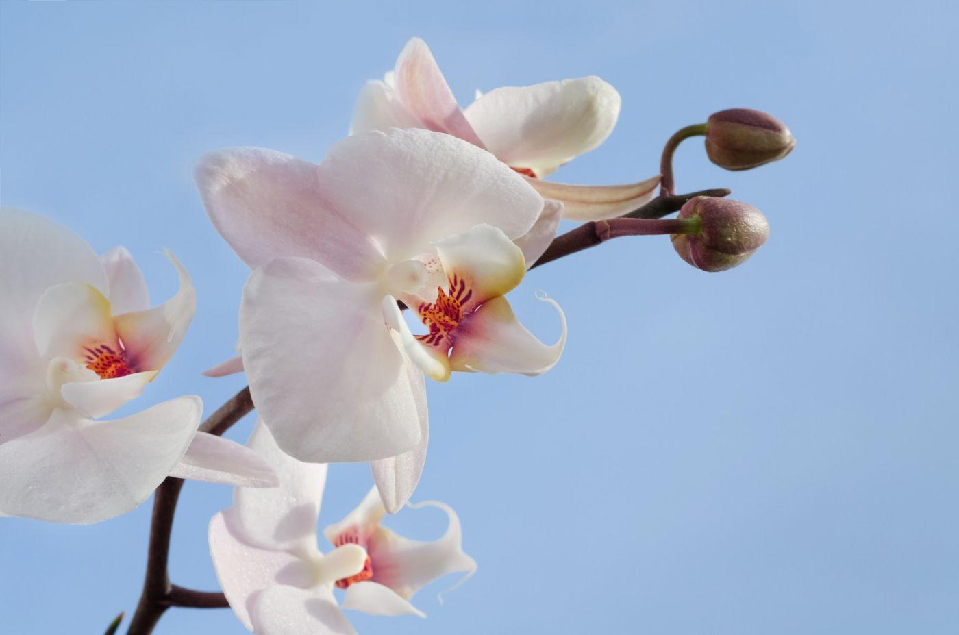 Comment faire pousser des orchidées [Guide pratique]