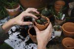 Garden Hacks for Beginners