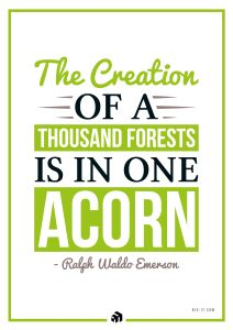 the creation of a thousand forests is in one acorn - Innovolo Product Development and Design - Innovation-as-a-Service