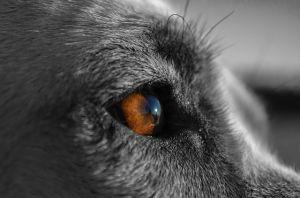 true instinct observing forward