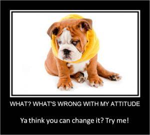 Mindset Tip Change Your Mindset By Thinking Like A Dog