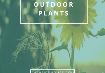 Easy To Grow Outdoor Plants