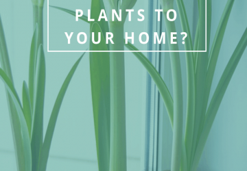 Why should you add plants to your home?