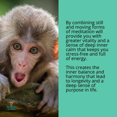 Moving verse stillness meditation