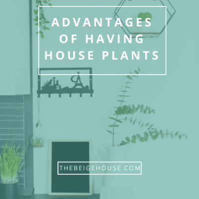 8 Advantages of Having House Plants