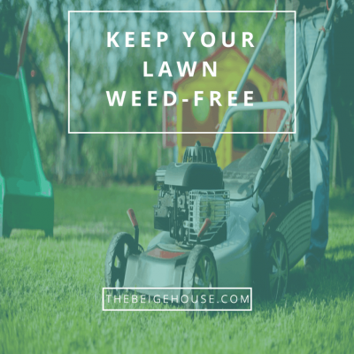How To Keep Your Lawn Weed Free