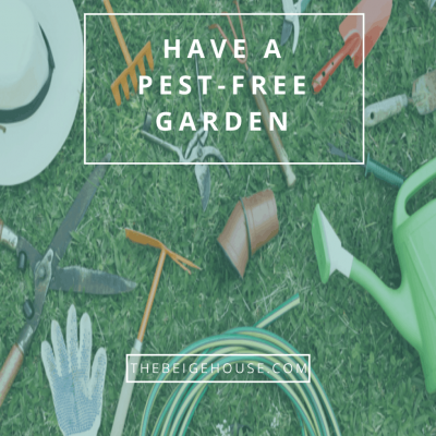 Have A Pest-Free Garden With These 4 Tips