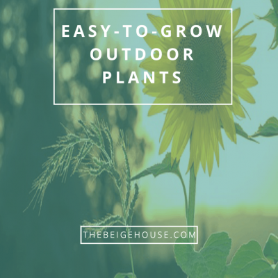 10 Easy-To-Grow Outdoor Plants