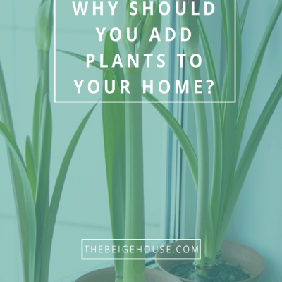 Green Is In: Incorporating Plants In Your Home