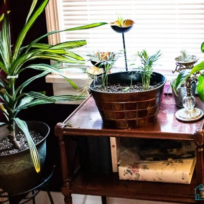 9 Plants I've Had Success with From Amazon