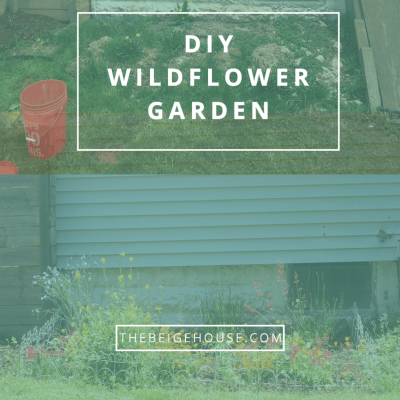 Creating a Wildflower Garden