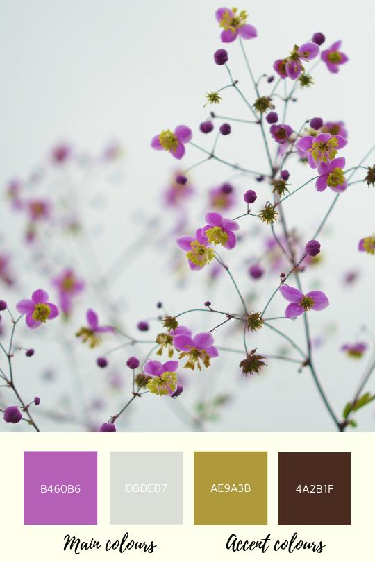 Collour palette with lilac colour