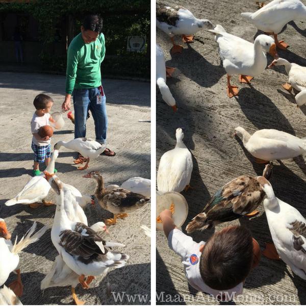 Cintai Corito Farm animals