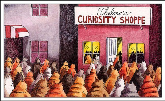 Thelma's Curiosity Shoppe