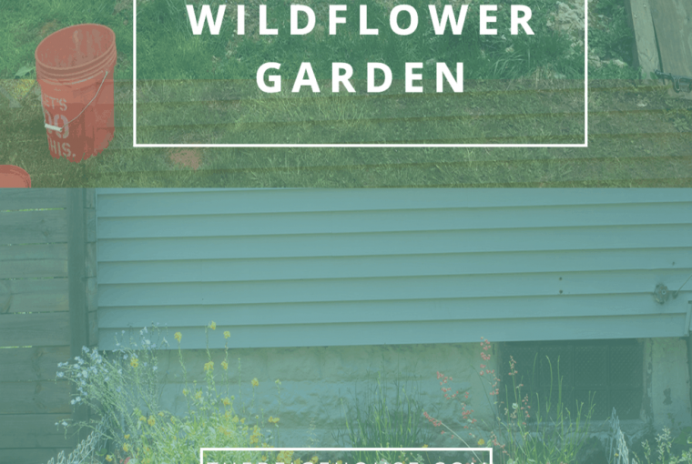 How to create a wildflower garden from scratch