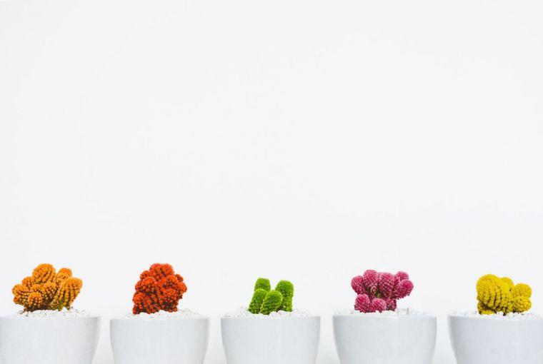 Grow Succulents