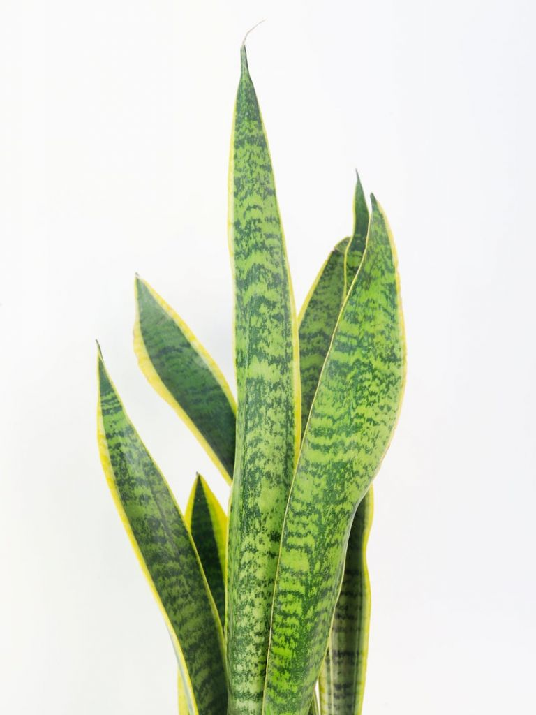 Low Maintenance Plants You Can Buy Online
